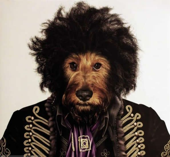 开心狮子贴 宠物摇滚大腕明星,超搞笑!