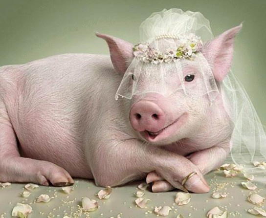 我也要做新娘了